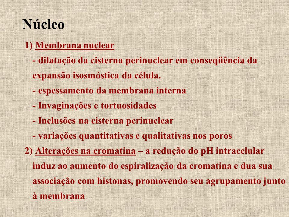 Núcleo 1) Membrana nuclear