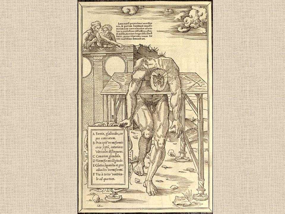 La dissection des parties du corps humain...