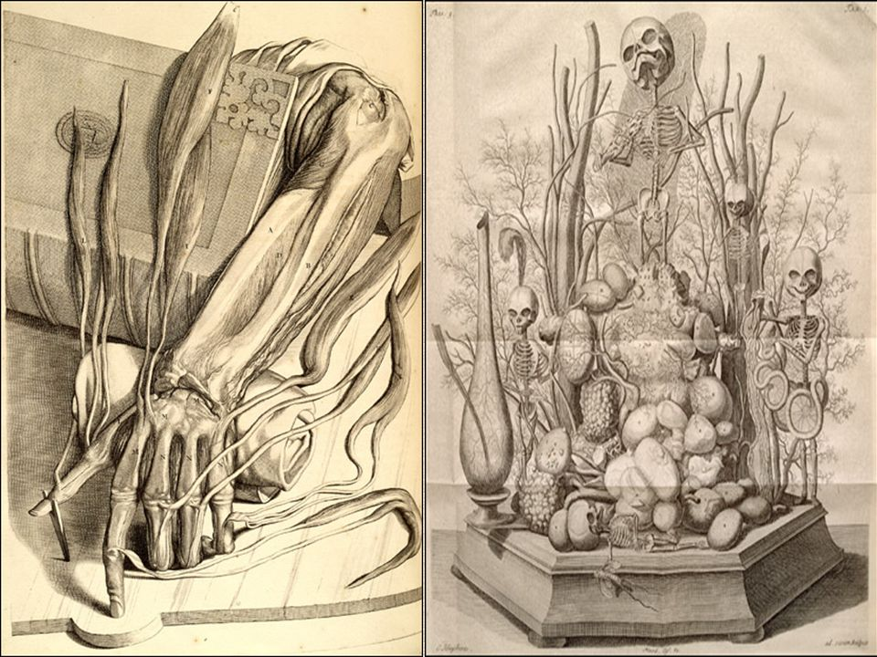 1) Ontleding des menschelyken lichaams...