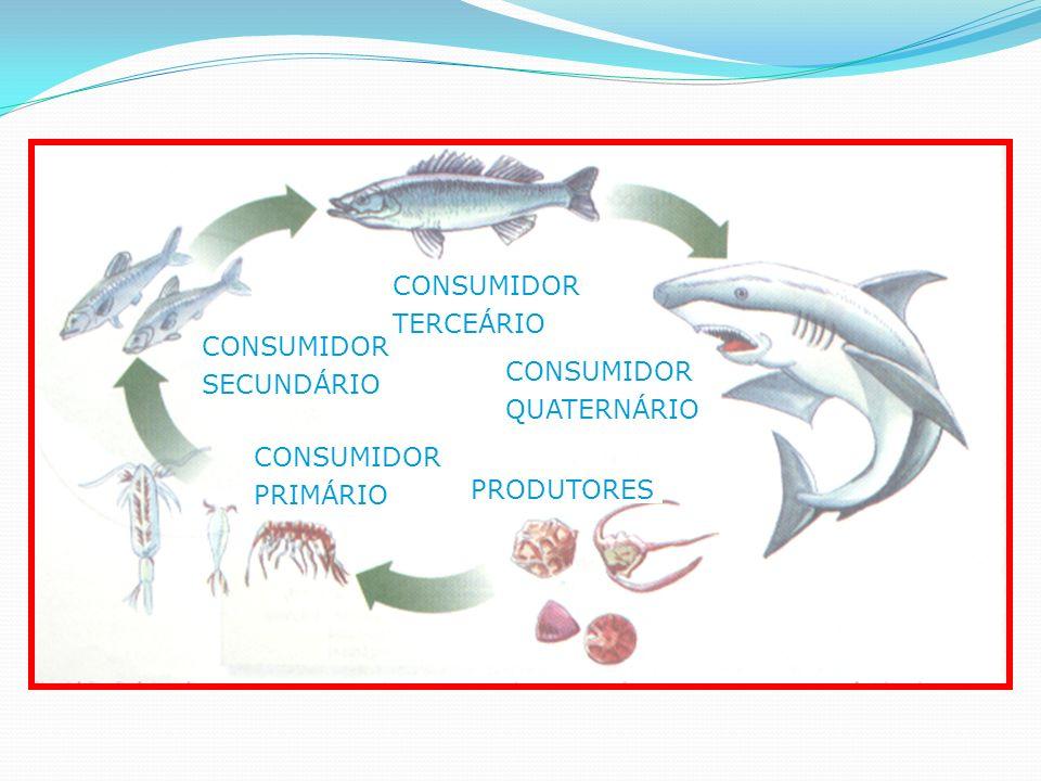 PRODUTORES CONSUMIDOR PRIMÁRIO SECUNDÁRIO TERCEÁRIO QUATERNÁRIO