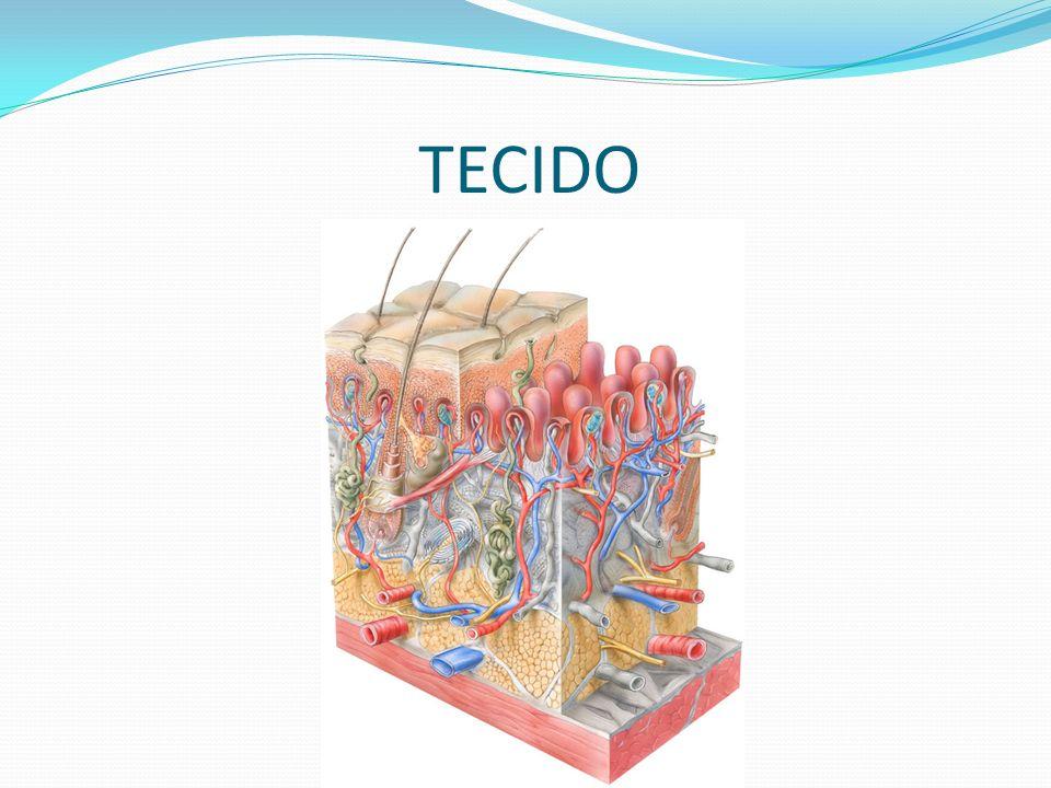 TECIDO