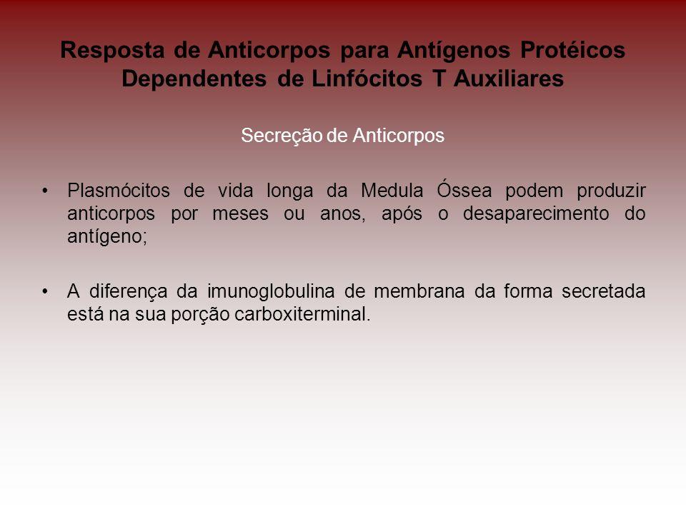 Secreção de Anticorpos