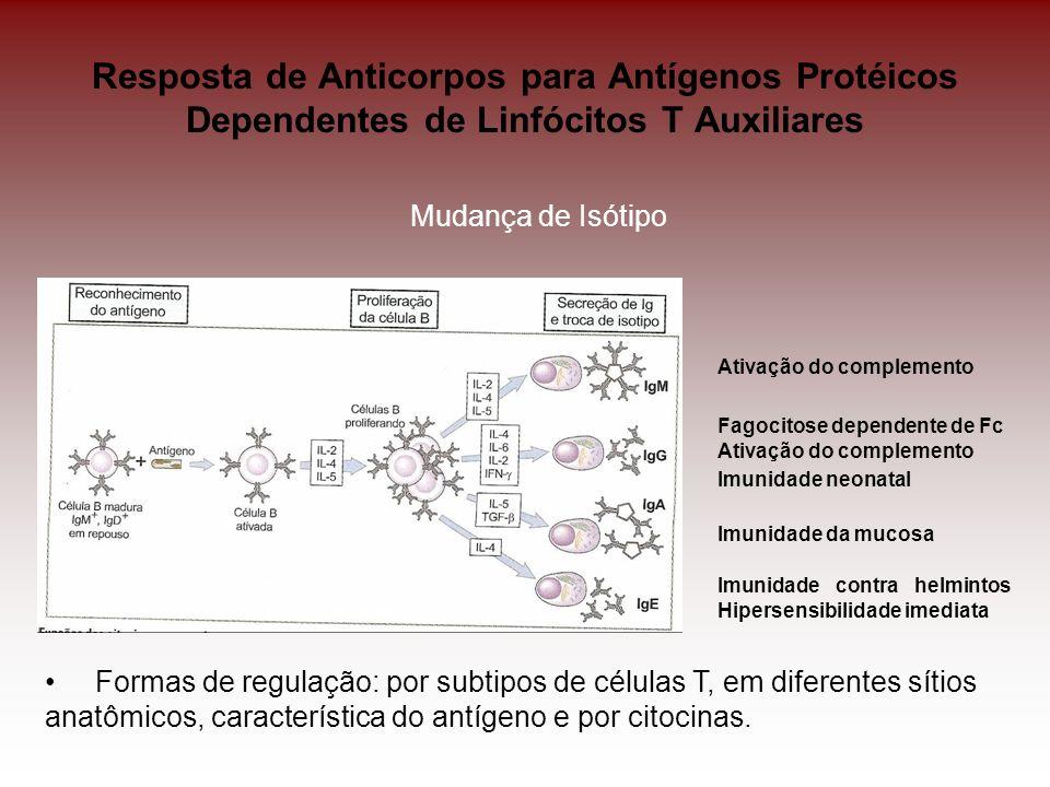 Resposta de Anticorpos para Antígenos Protéicos Dependentes de Linfócitos T Auxiliares