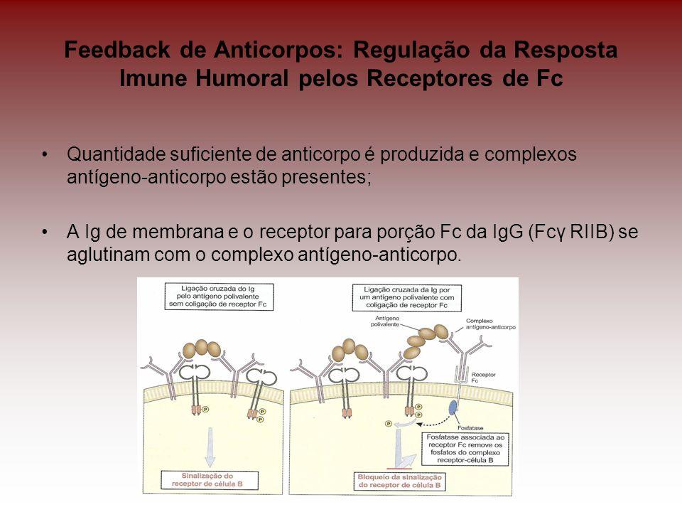 Feedback de Anticorpos: Regulação da Resposta Imune Humoral pelos Receptores de Fc