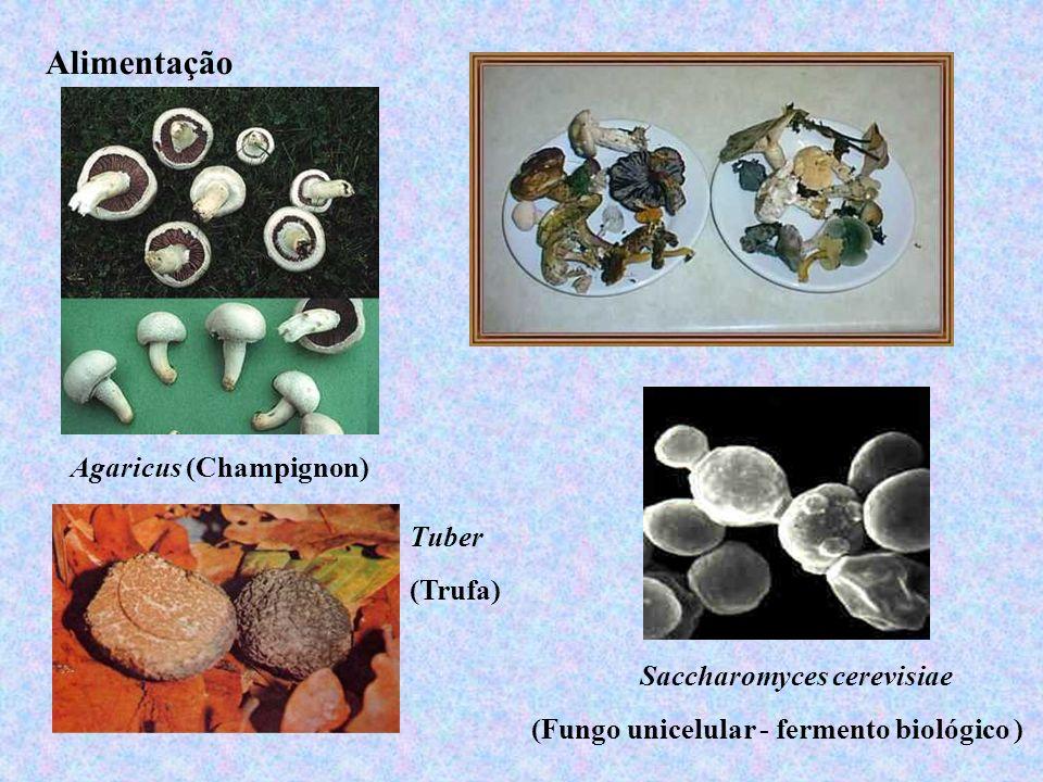 Alimentação Agaricus (Champignon) Tuber (Trufa)