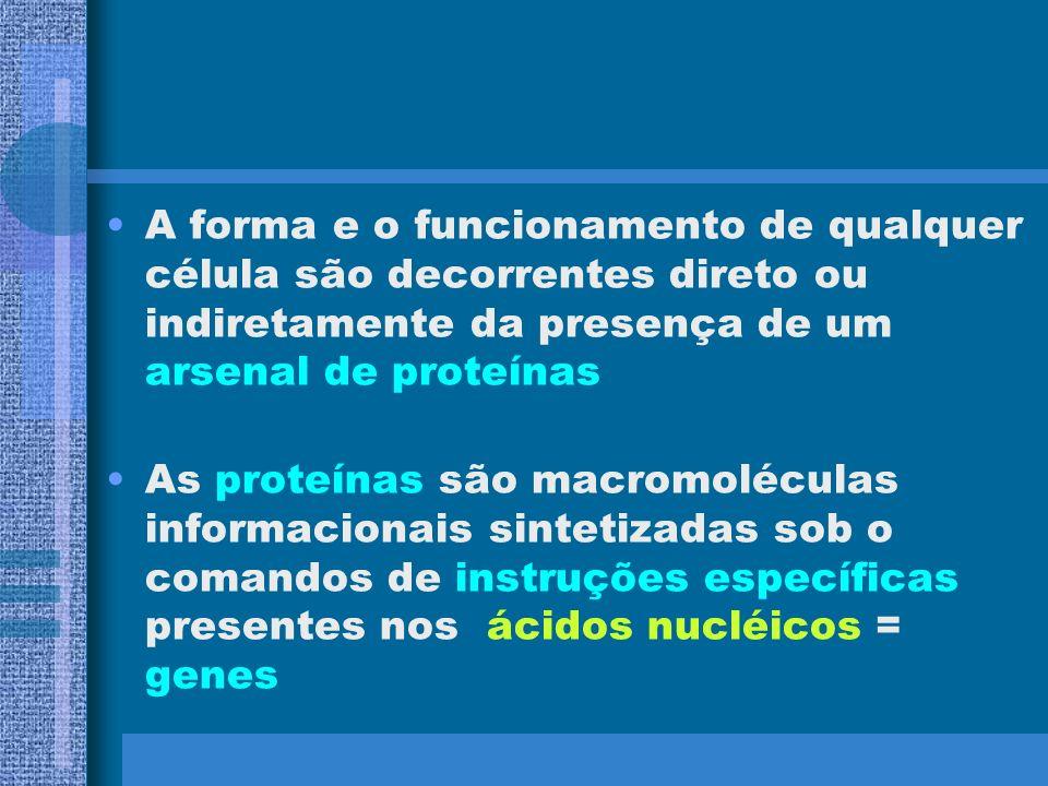 A forma e o funcionamento de qualquer célula são decorrentes direto ou indiretamente da presença de um arsenal de proteínas