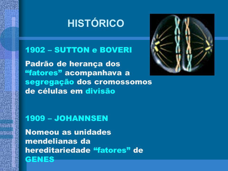 HISTÓRICO 1902 – SUTTON e BOVERI