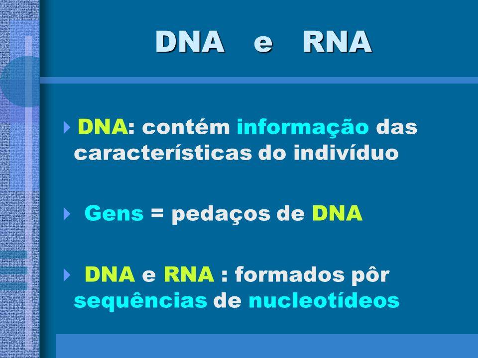 DNA e RNA DNA: contém informação das características do indivíduo