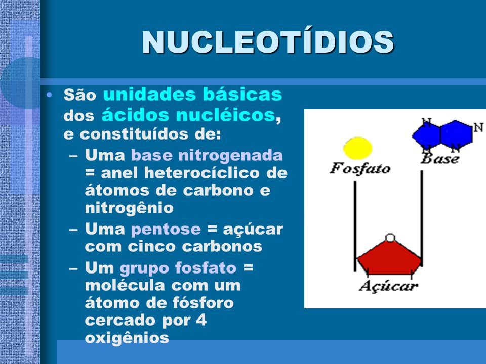 NUCLEOTÍDIOSSão unidades básicas dos ácidos nucléicos, e constituídos de: