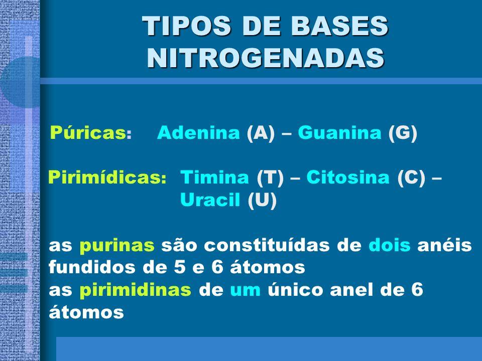 TIPOS DE BASES NITROGENADAS