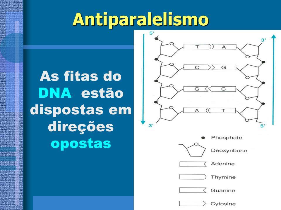 As fitas do DNA estão dispostas em direções opostas