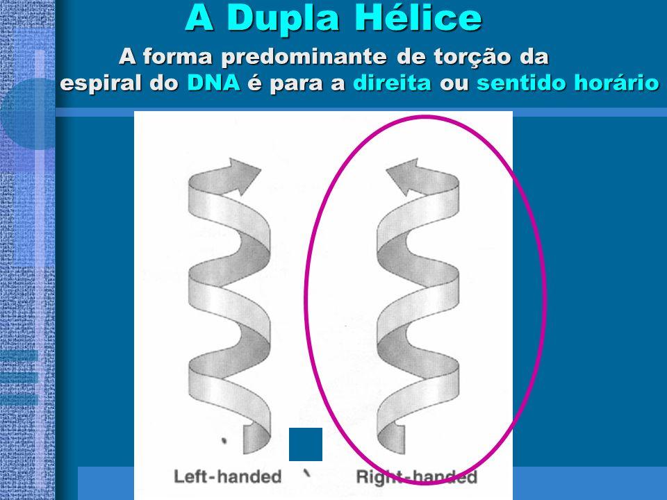 A Dupla Hélice A forma predominante de torção da espiral do DNA é para a direita ou sentido horário.