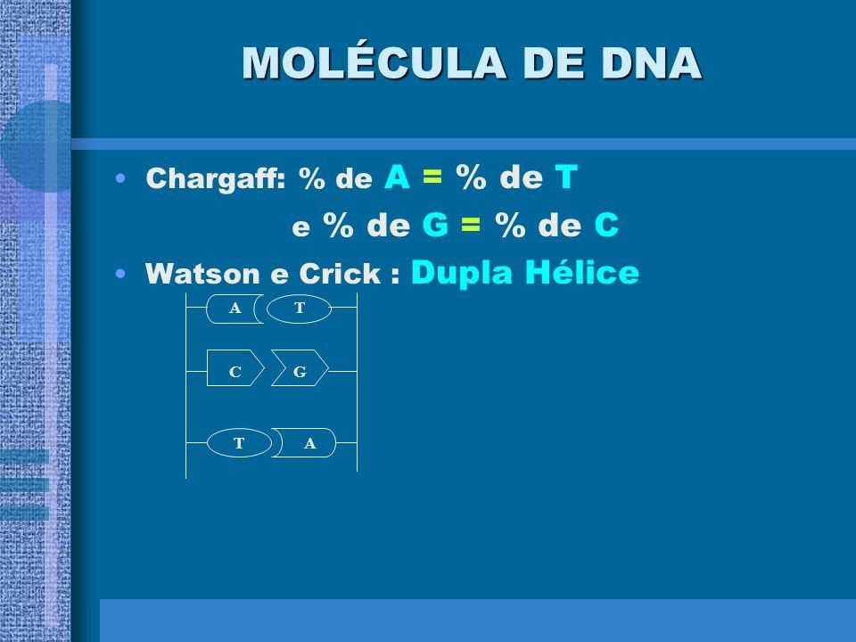 MOLÉCULA DE DNA e % de G = % de C Chargaff: % de A = % de T