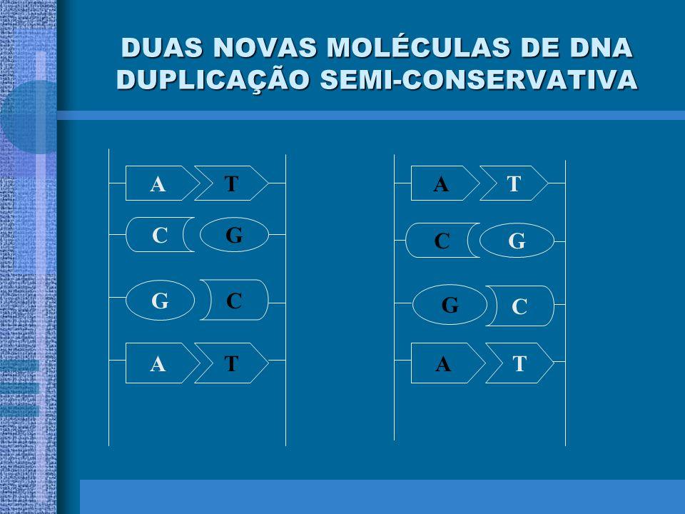 DUAS NOVAS MOLÉCULAS DE DNA DUPLICAÇÃO SEMI-CONSERVATIVA