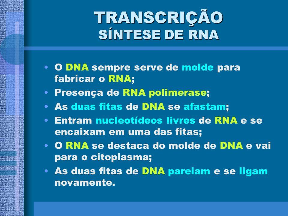 TRANSCRIÇÃO SÍNTESE DE RNA