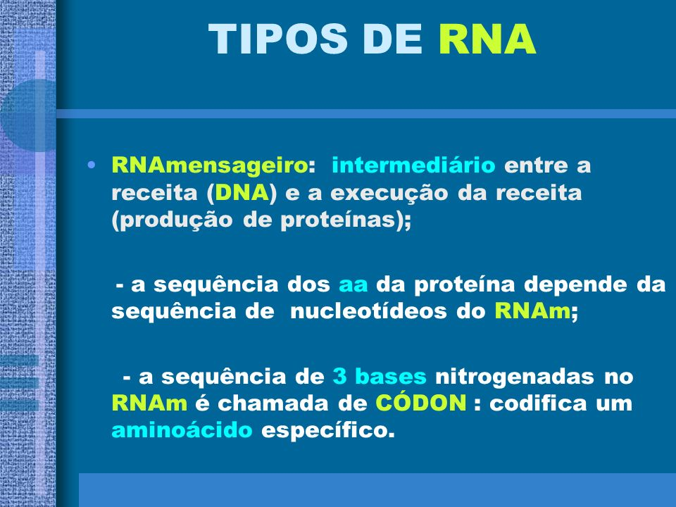 TIPOS DE RNARNAmensageiro: intermediário entre a receita (DNA) e a execução da receita (produção de proteínas);