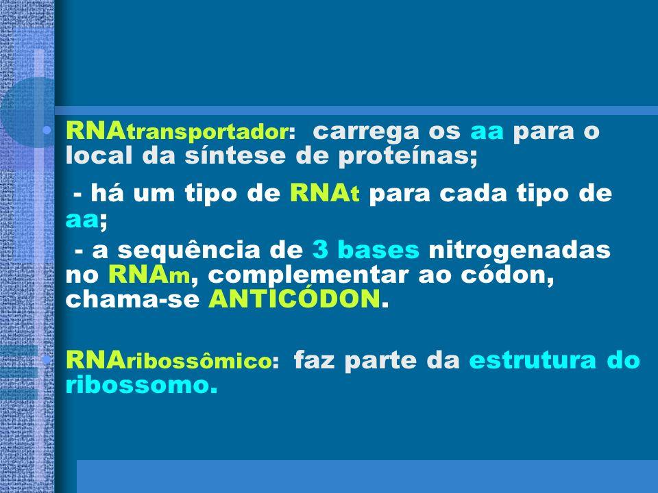 - há um tipo de RNAt para cada tipo de aa;