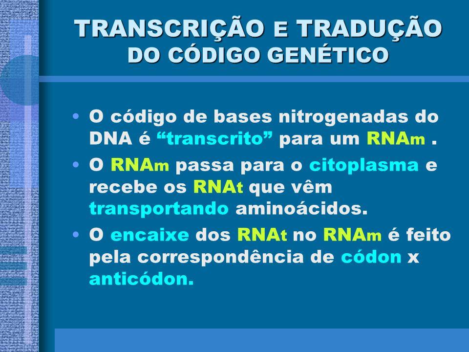 TRANSCRIÇÃO E TRADUÇÃO DO CÓDIGO GENÉTICO