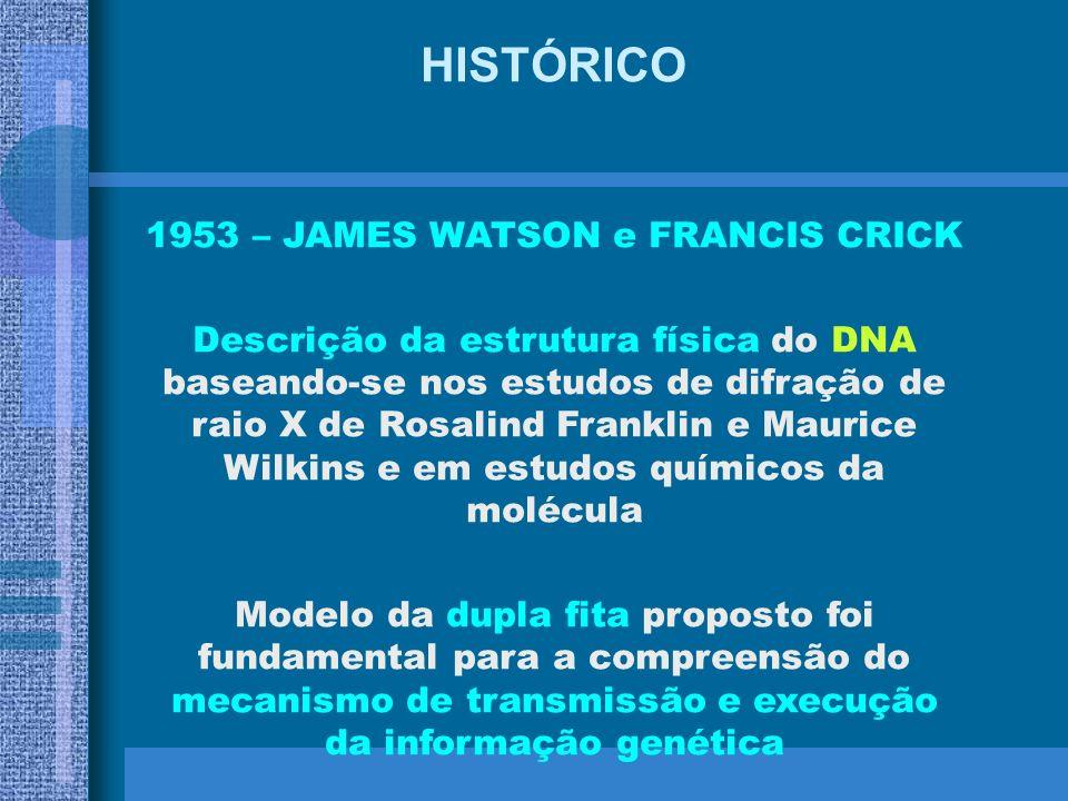 1953 – JAMES WATSON e FRANCIS CRICK