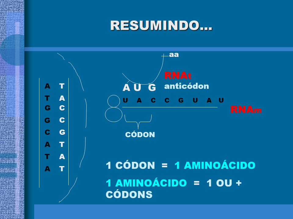 RESUMINDO... RNAt anticódon A U G RNAm 1 CÓDON = 1 AMINOÁCIDO