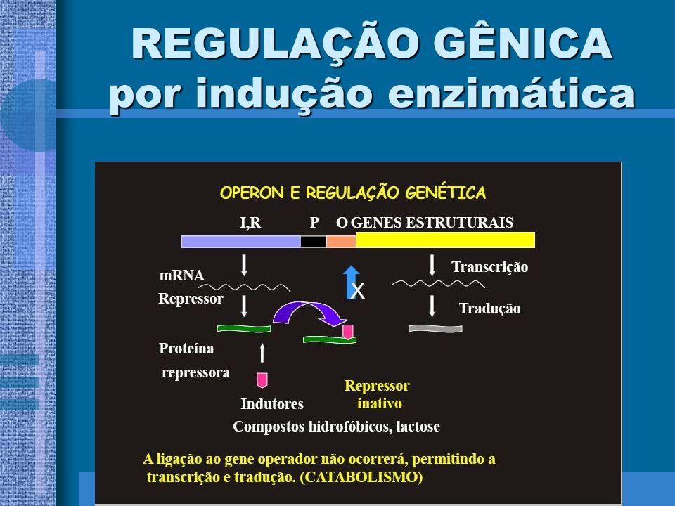 REGULAÇÃO GÊNICA por indução enzimática