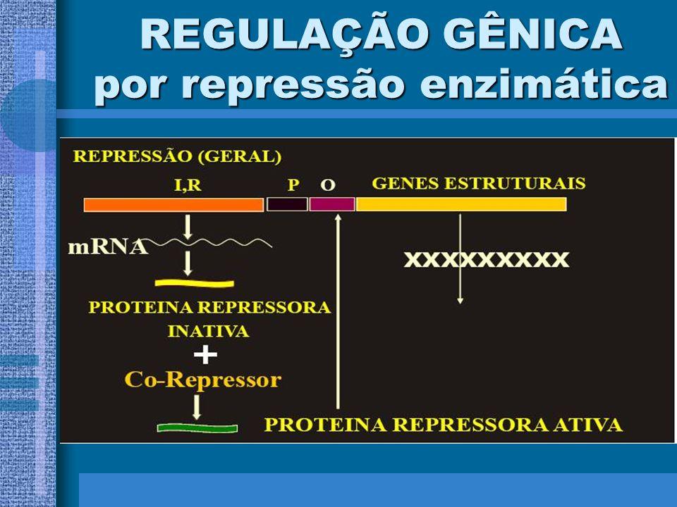 REGULAÇÃO GÊNICA por repressão enzimática