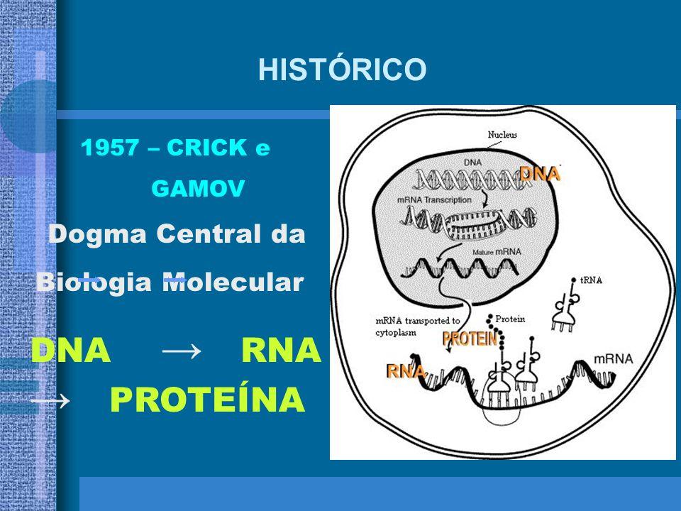 DNA → RNA → PROTEÍNA HISTÓRICO Dogma Central da 1957 – CRICK e GAMOV