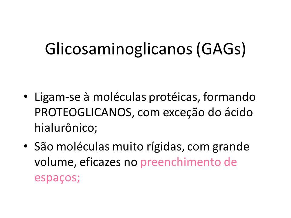 Glicosaminoglicanos (GAGs)
