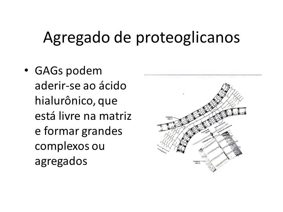 Agregado de proteoglicanos