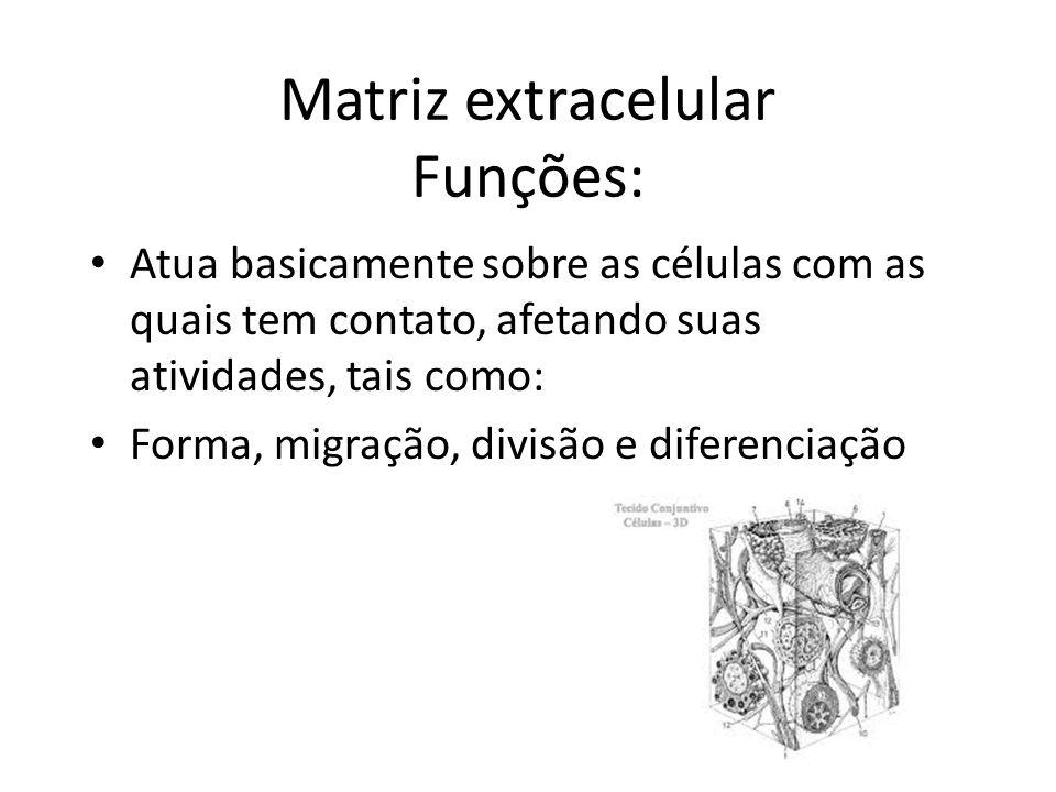 Matriz extracelular Funções: