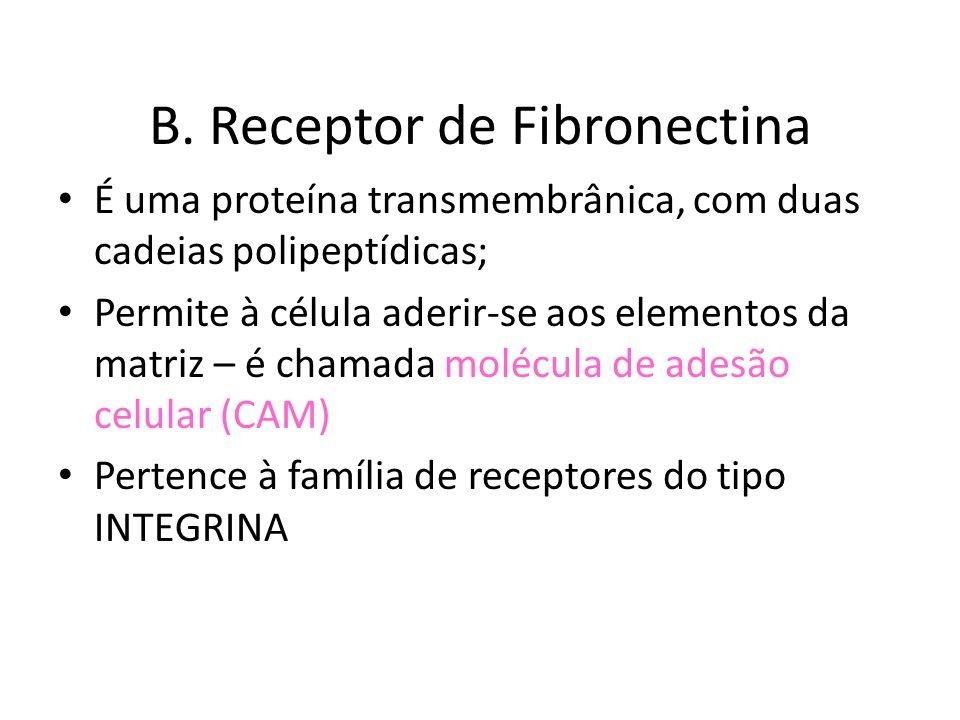 B. Receptor de Fibronectina