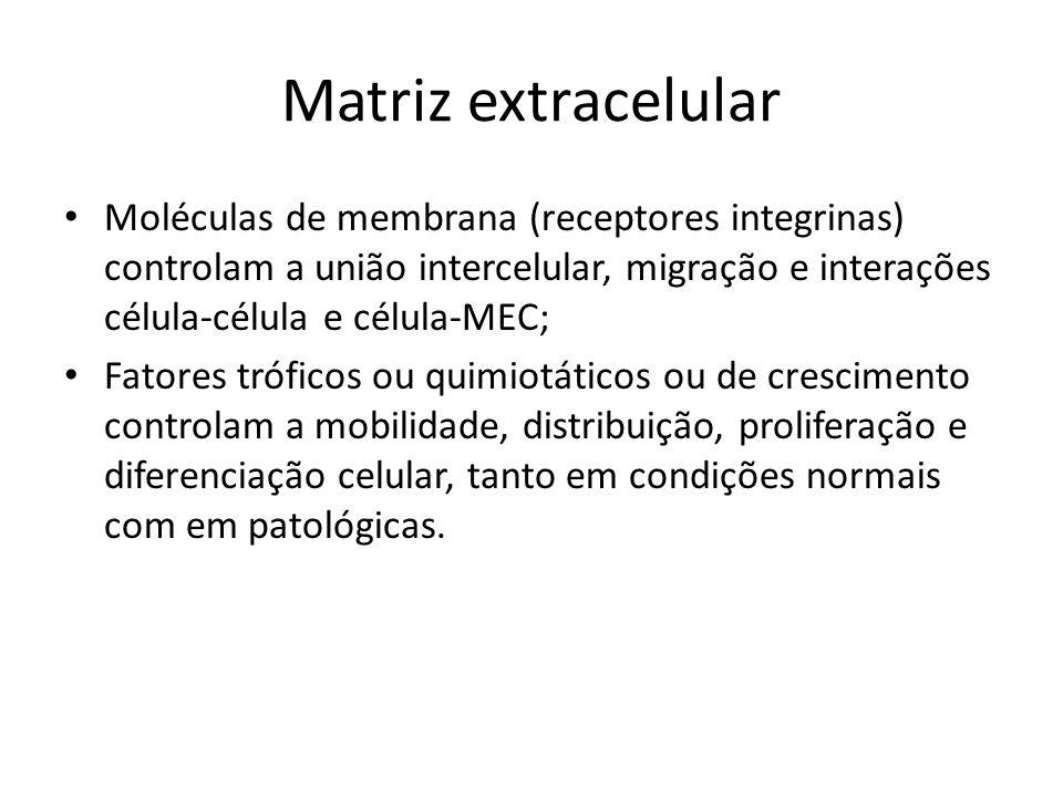 Matriz extracelular Moléculas de membrana (receptores integrinas) controlam a união intercelular, migração e interações célula-célula e célula-MEC;