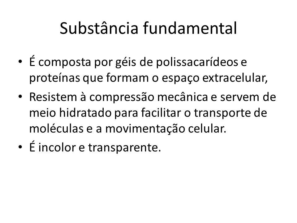 Substância fundamental
