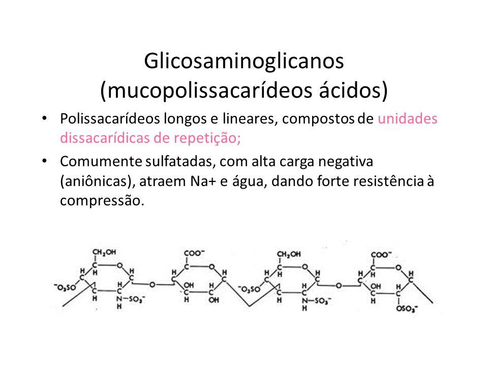 Glicosaminoglicanos (mucopolissacarídeos ácidos)