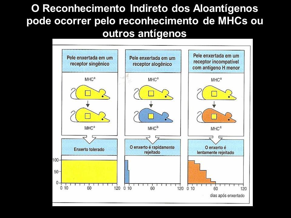 O Reconhecimento Indireto dos Aloantígenos pode ocorrer pelo reconhecimento de MHCs ou outros antígenos