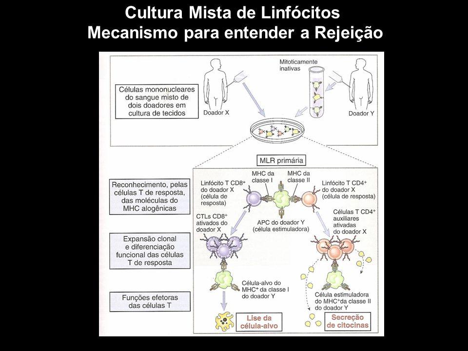 Cultura Mista de Linfócitos Mecanismo para entender a Rejeição