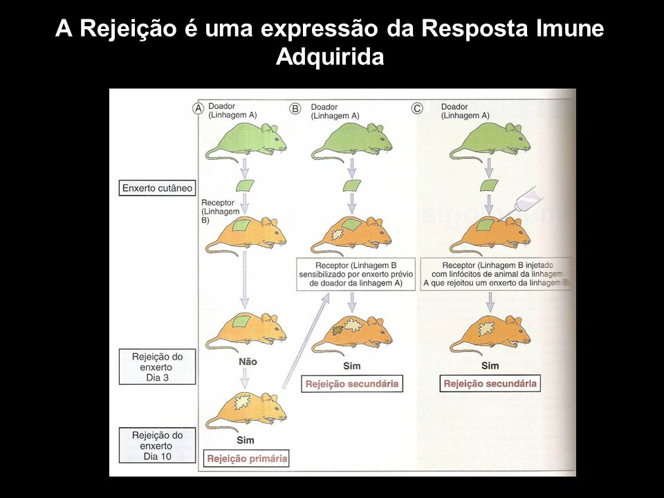 A Rejeição é uma expressão da Resposta Imune Adquirida