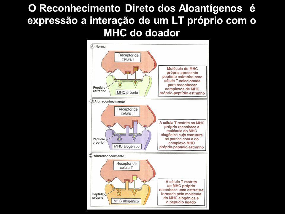 O Reconhecimento Direto dos Aloantígenos é expressão a interação de um LT próprio com o MHC do doador