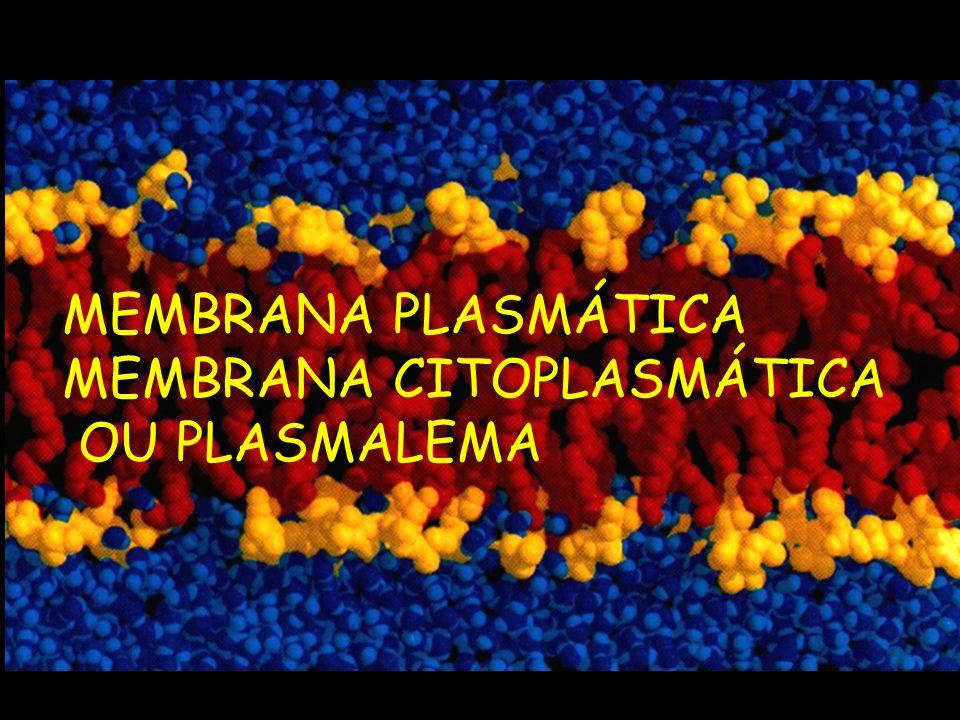 MEMBRANA PLASMÁTICA MEMBRANA CITOPLASMÁTICA OU PLASMALEMA