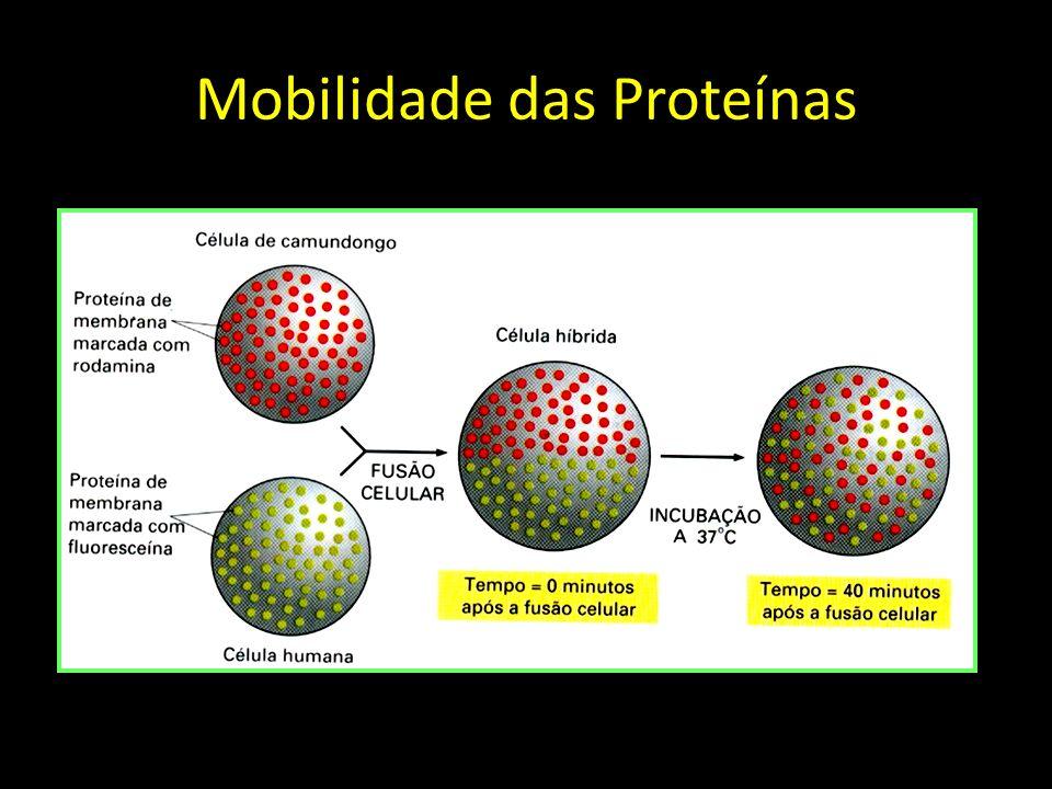 Mobilidade das Proteínas