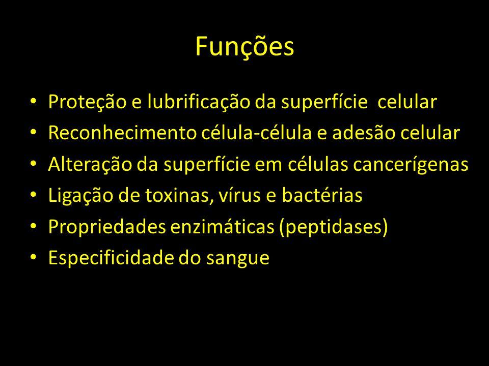 Funções Proteção e lubrificação da superfície celular