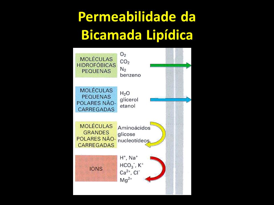 Permeabilidade da Bicamada Lipídica