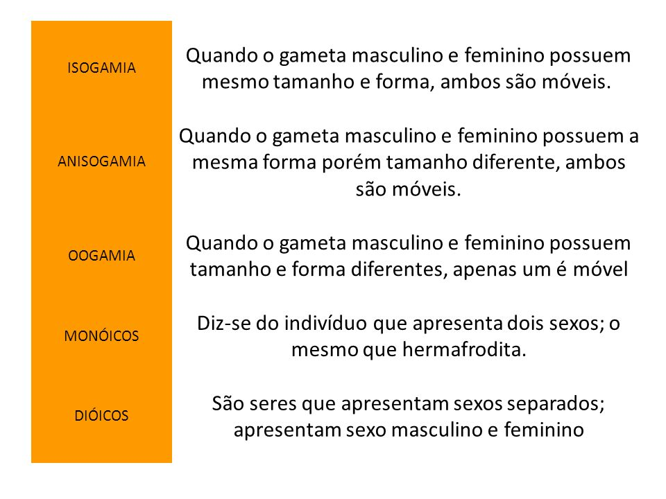 ISOGAMIA Quando o gameta masculino e feminino possuem mesmo tamanho e forma, ambos são móveis. ANISOGAMIA.