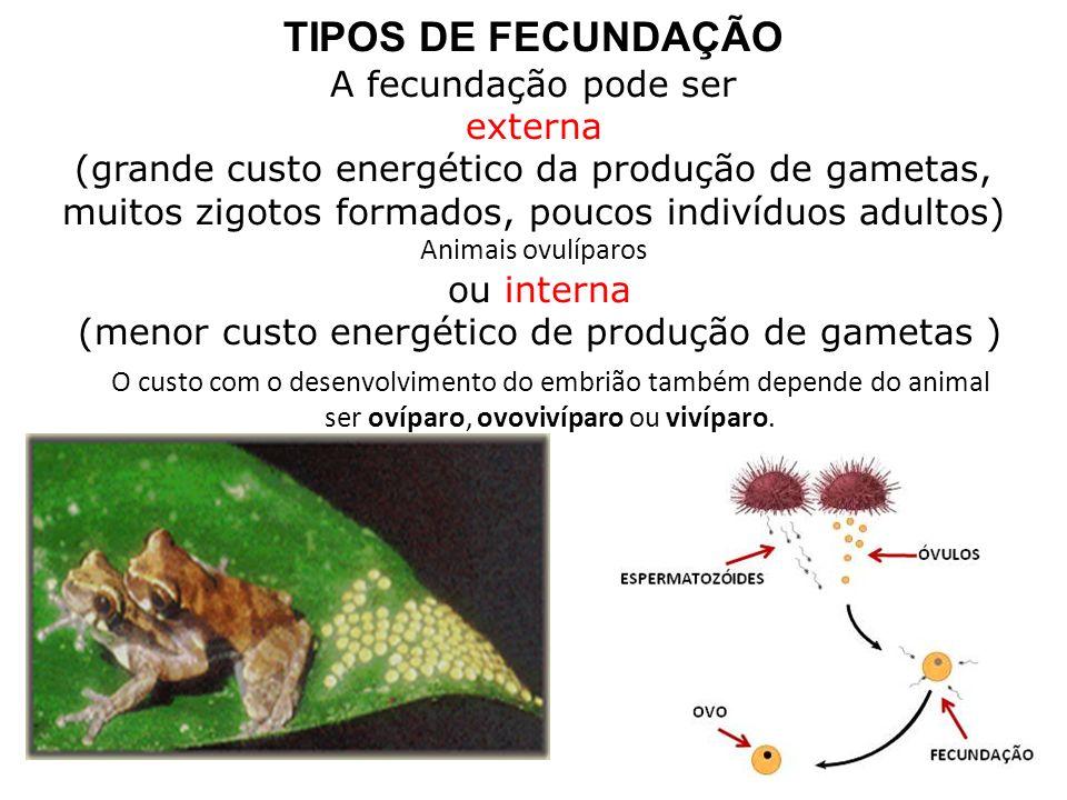 (menor custo energético de produção de gametas )