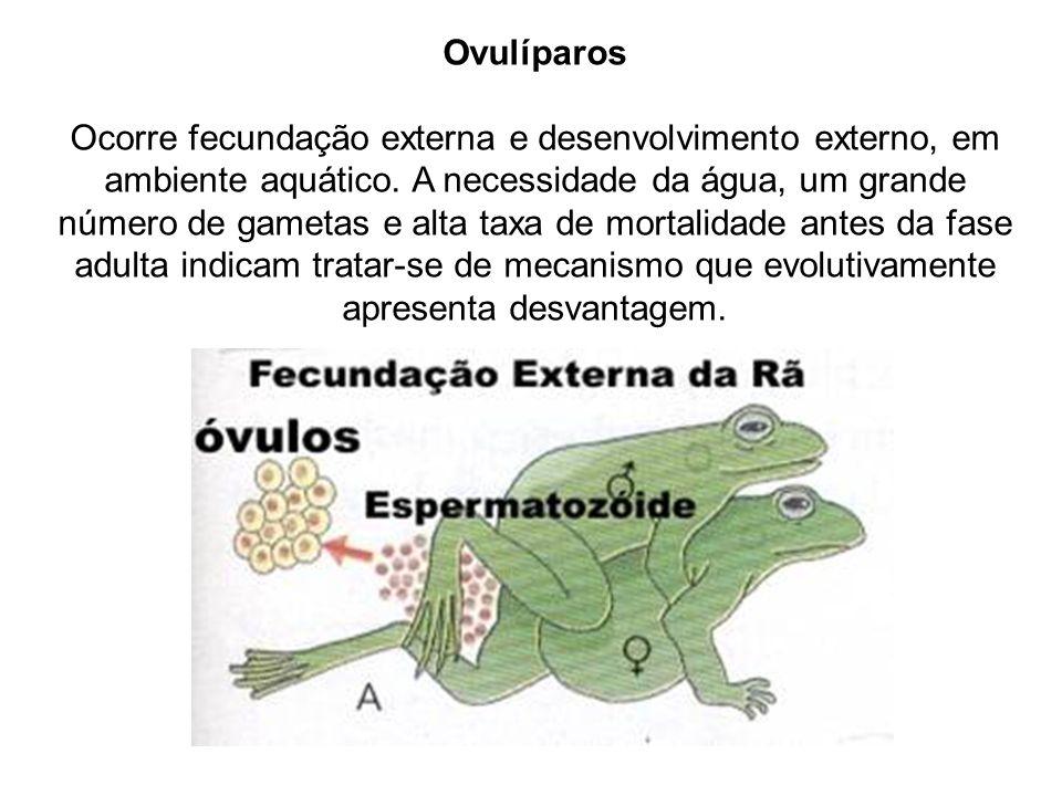 Ovulíparos