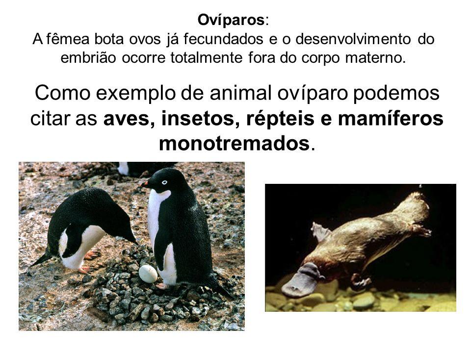 Ovíparos:A fêmea bota ovos já fecundados e o desenvolvimento do embrião ocorre totalmente fora do corpo materno.