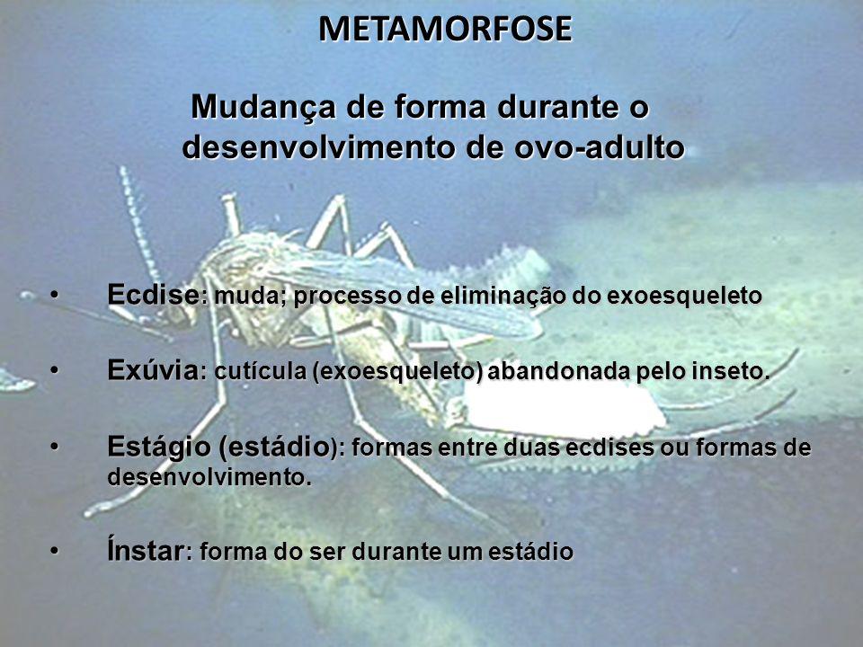 METAMORFOSE Mudança de forma durante o desenvolvimento de ovo-adulto