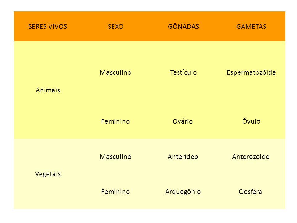 SERES VIVOS SEXO. GÔNADAS. GAMETAS. Animais. Masculino. Testículo. Espermatozóide. Feminino.