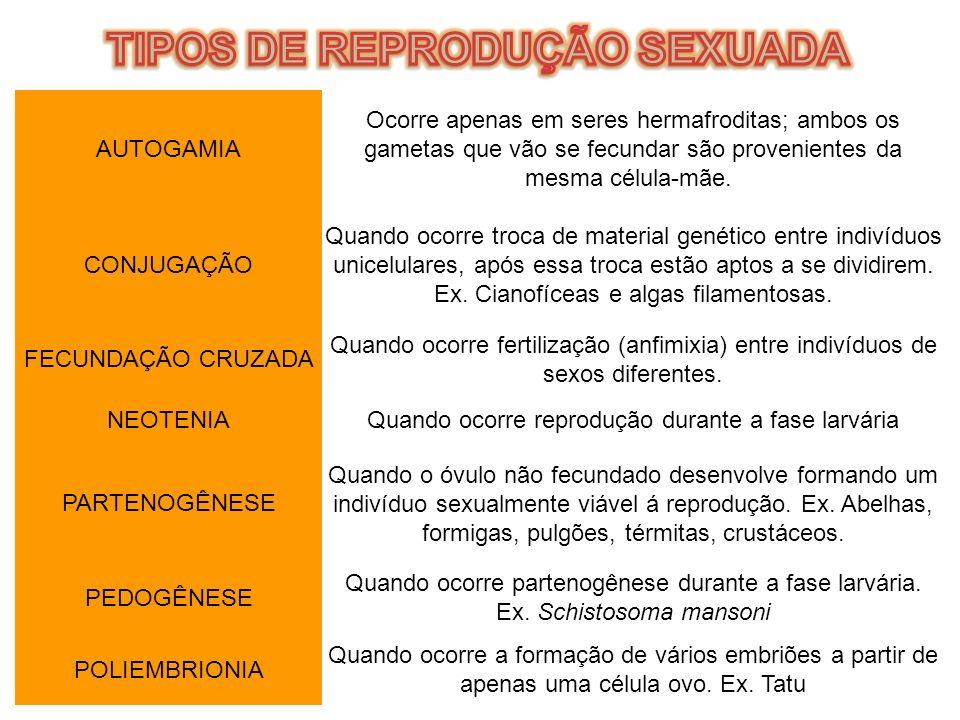 TIPOS DE REPRODUÇÃO SEXUADA
