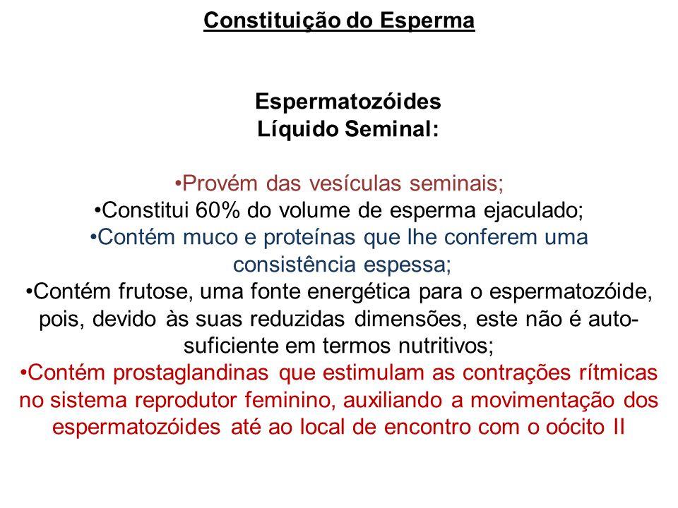 Constituição do Esperma